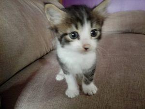 Bebe gato NALA
