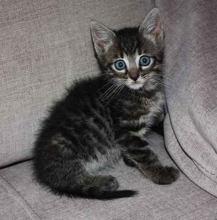 bebe gato MAYA