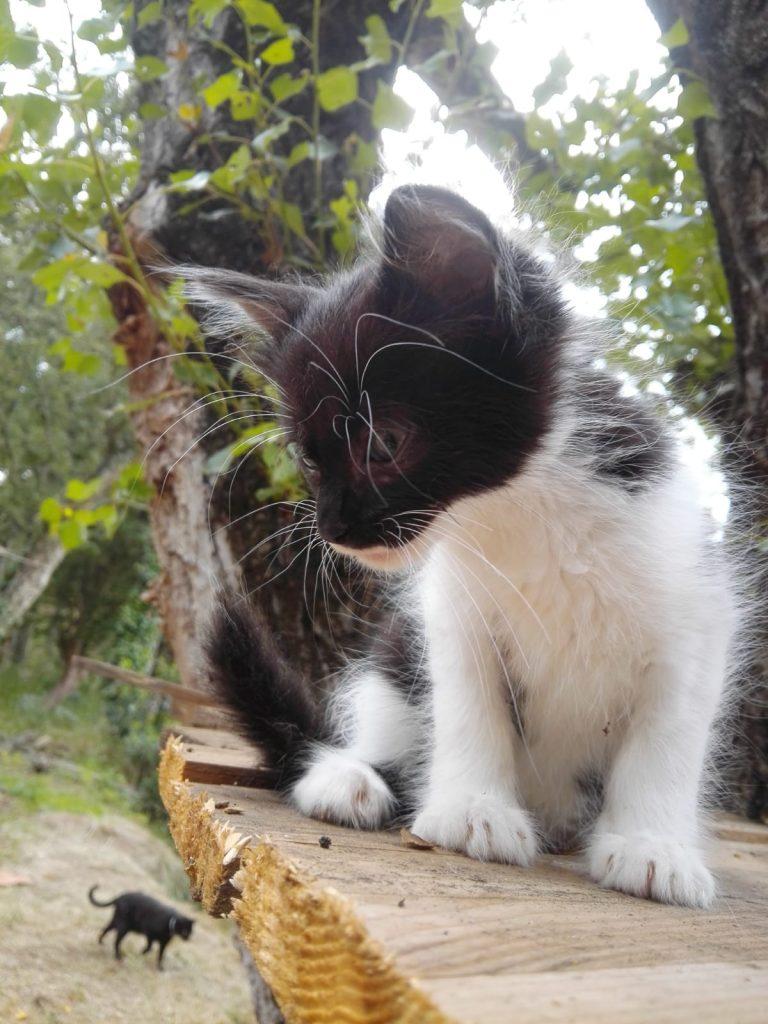 cachorro gato en adopcion