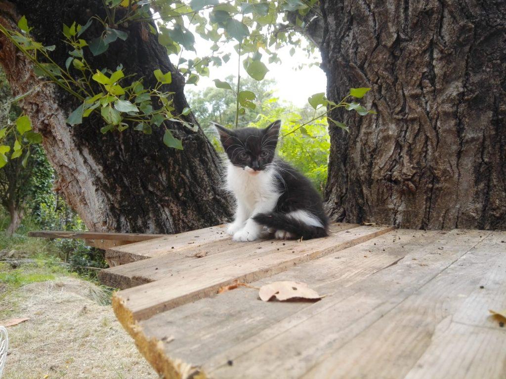 cachorro gato SUE