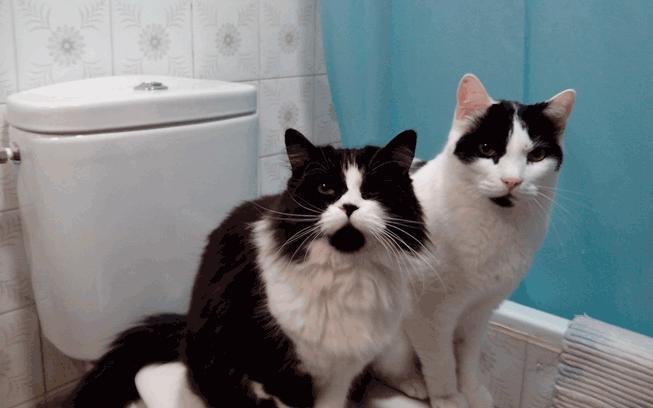 gatos encima de WC