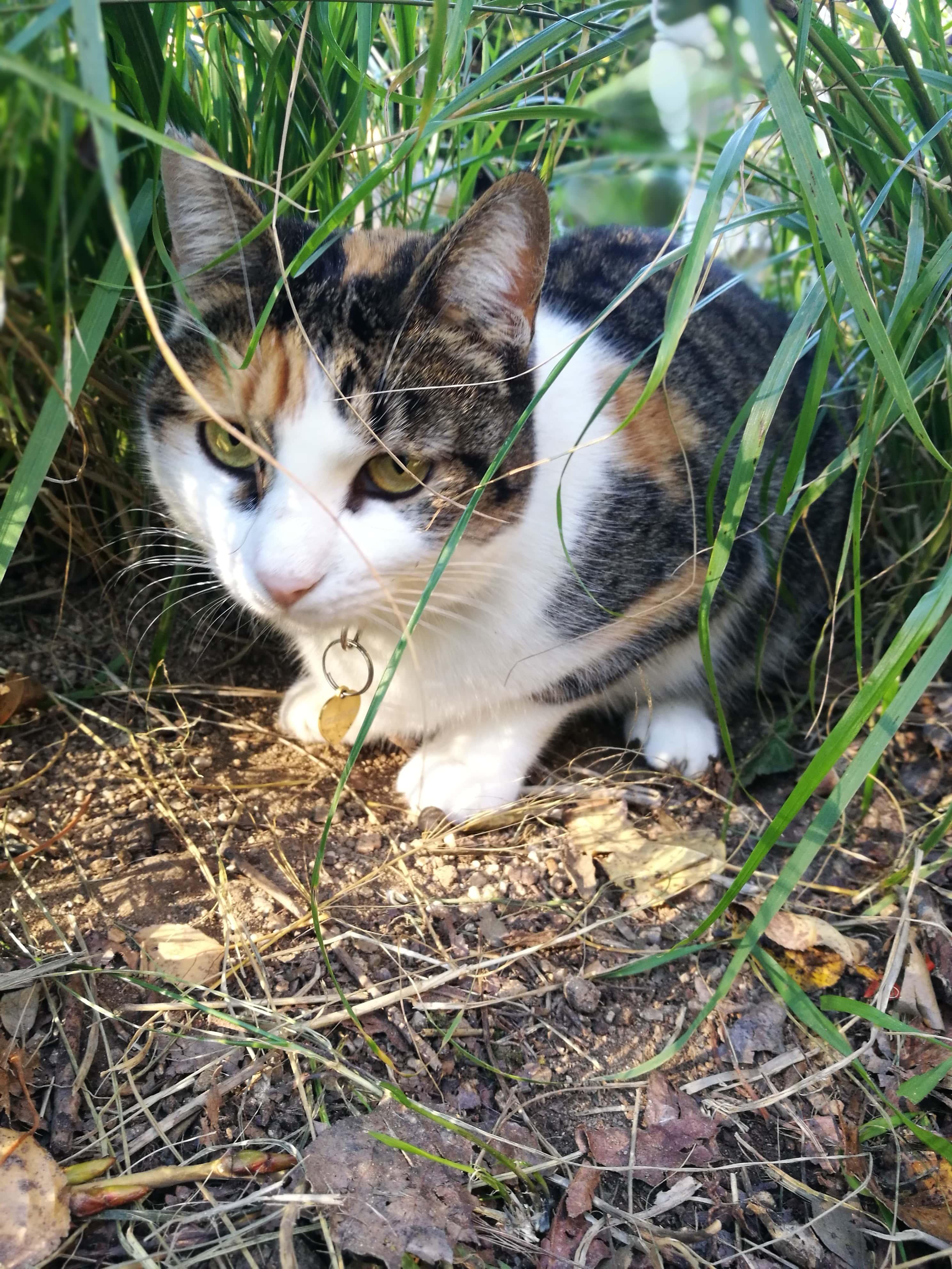 gato en adopción-min