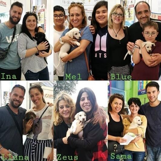 adoptantes cachorros de perro