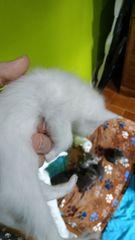 Cachorro Gato NUM. 11 3