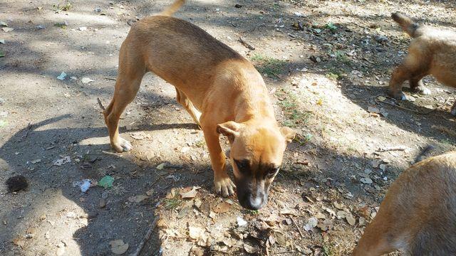 Cachorro American2 6/21 17