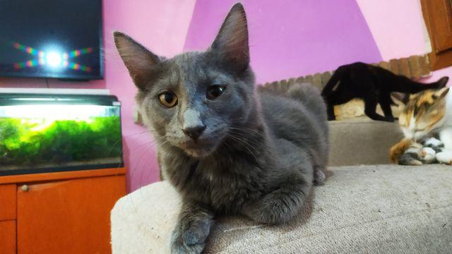 Cachorro Gato Nebulung en adopción 6