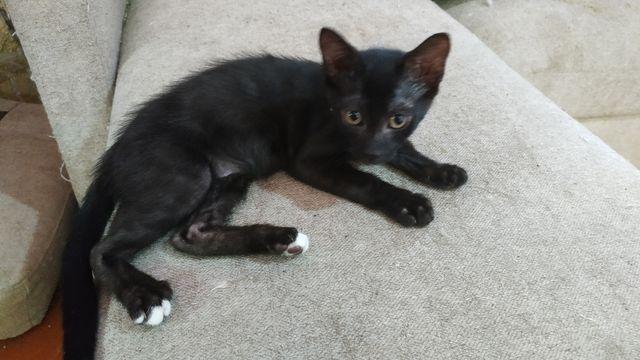 Cachorrita Gata Negra 4