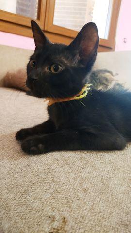 Cachorrita Gata Negra 8