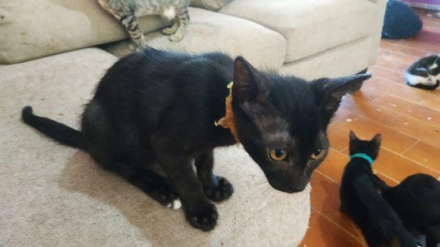 Cachorrita Gata Negra 19