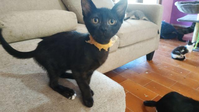 Cachorrita Gata Negra 21