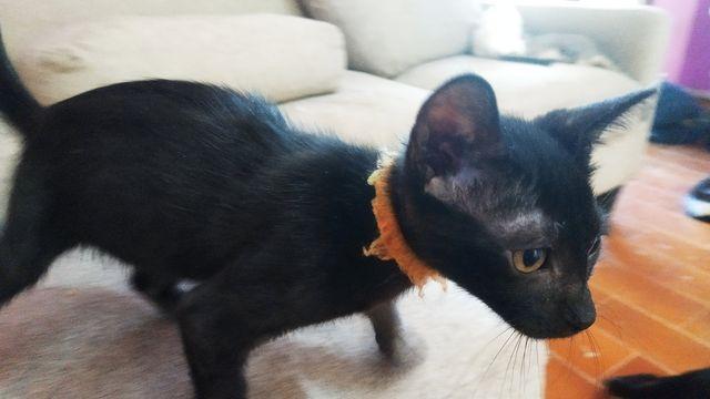 Cachorrita Gata Negra 22