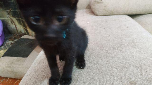 Cachorro Gato Hembra, collar azul. 5