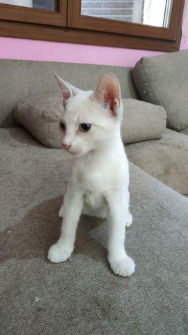 Cachorro Gato Blanco 1