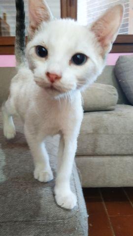 Cachorro Gato Blanco 7