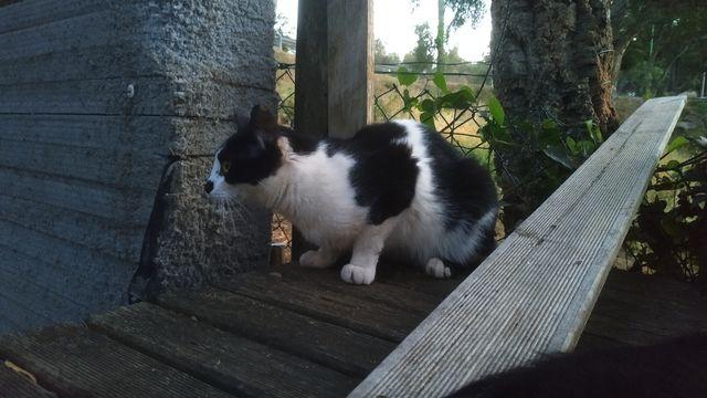 Simón, Gato adulto en adopción 4