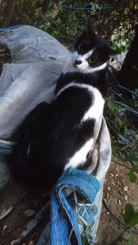 Simón, Gato adulto en adopción 5