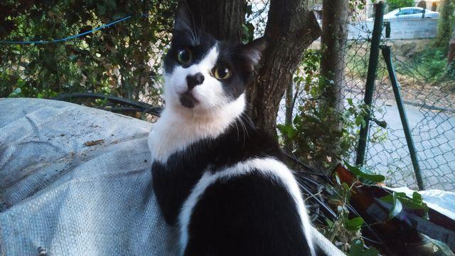 Simón, Gato adulto en adopción 6